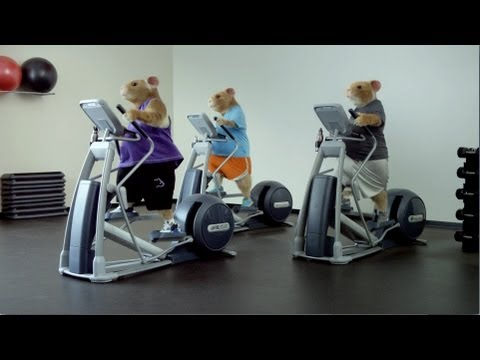 Kia Soul - Totally Transformed -  Hamsters - Applause